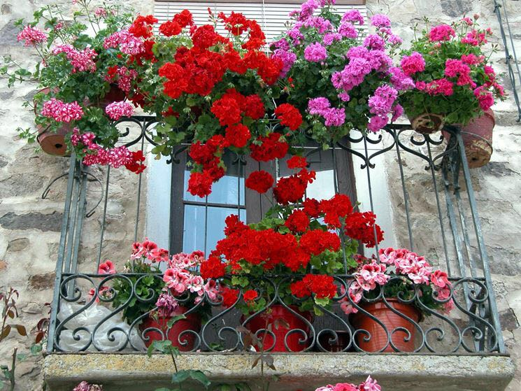 Concorso Balconi e angoli fioriti a Sambiase - LameziaTerme.it