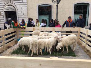 Pasqua con gli agnellini