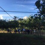 Incontro del Rotary Club sul kiwi - LameziaTerme.it