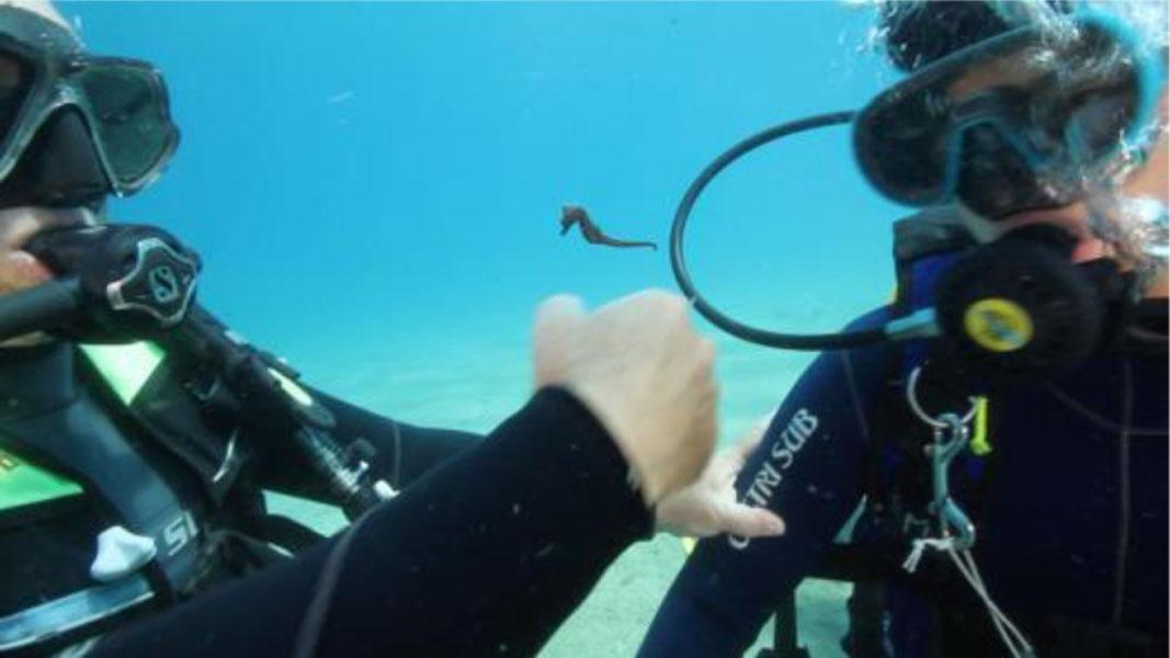 Monitoraggio glicemia sott'acqua - LameziaTerme.it