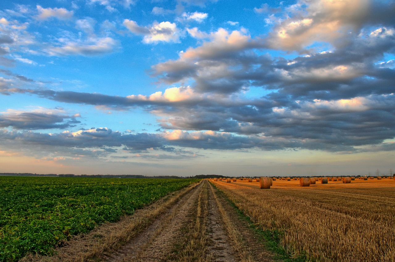 Calabria. Agricoltura: bloccati in Regione 6 milioni di euro