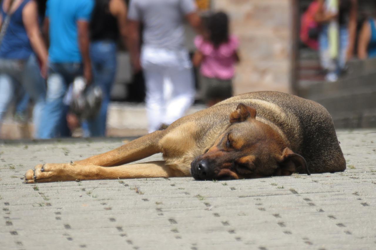 Davoli. Maltrattamento animali e resistenza a pubblico ufficiale