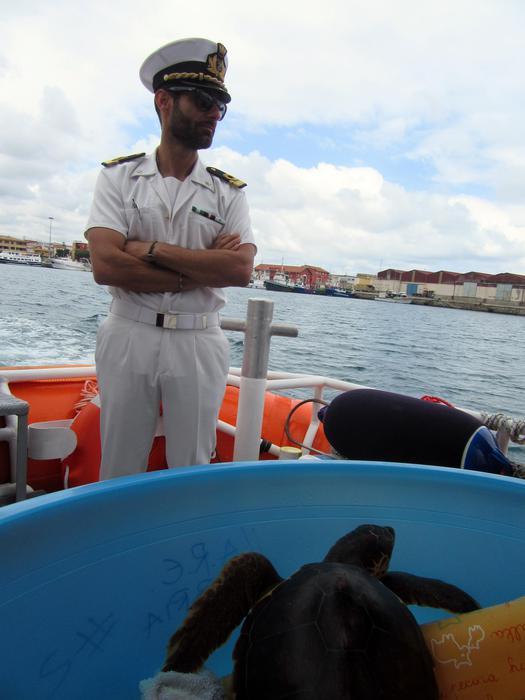 Lamezia. Caretta caretta liberata in mare dopo cure
