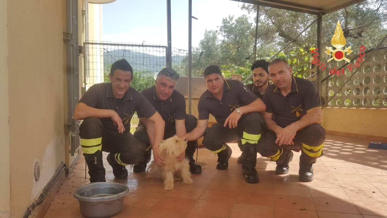 Lamezia. I vigili del fuoco salvano cane abbandonato