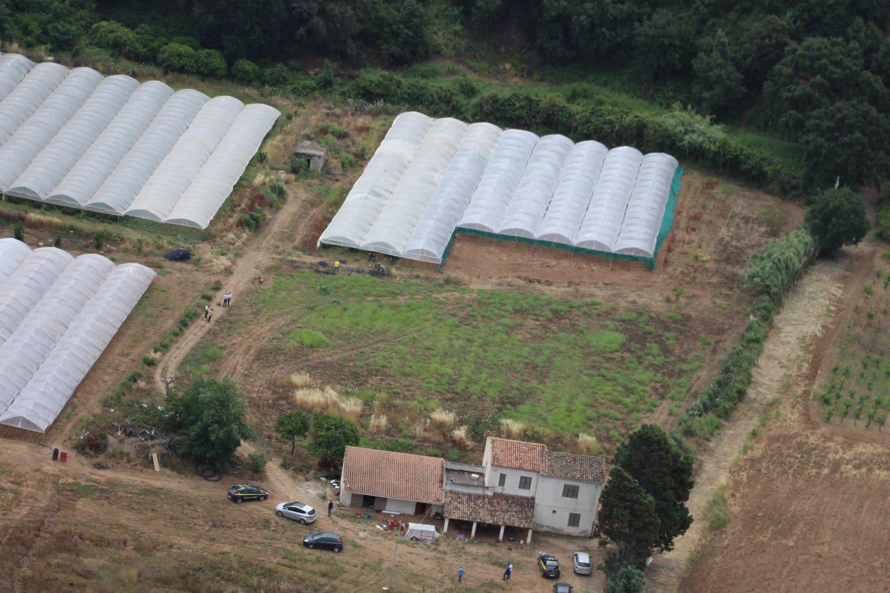 Pizzo. Operazione Cannabis Farm, sequestrati 89 mila fusti di marijuana