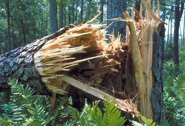 Geymet (AI): Reggio Calabria, ancora nessun provvedimento per la caduta alberi