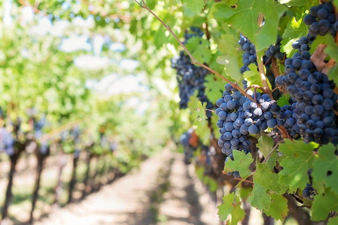Lamezia. Sequestrata azienda vitivinicola per truffa aggravata