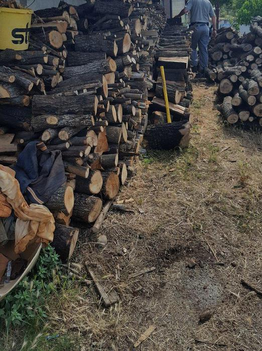 Roggiano Gravina. Taglio bosco in area incendio, una denuncia
