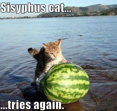 Sisifo: una gatta da pelare!