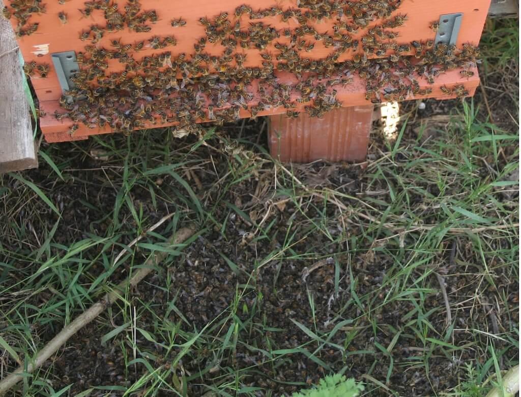 Coldiretti. Apicoltura: occorre far volare le api della Calabria