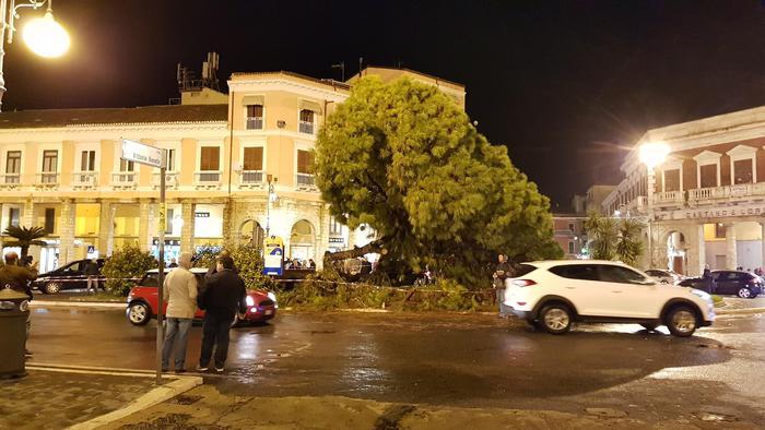Maltempo, cade vecchio pino in centro Crotone