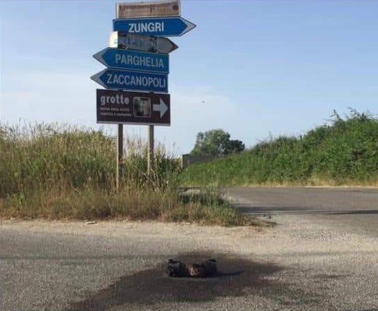 Zungri (VV). Ennesimo caso di cattiveria: cane dato alle fiamme