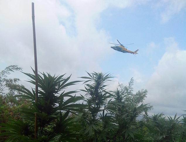 Melito Porto Salvo (RC). Scoperte 4200 piante di cannabis