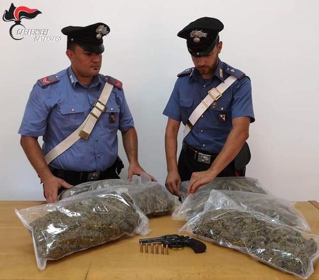 Curinga (CZ). Sequestrate circa 330 piante di cannabis, arrestato 48enne