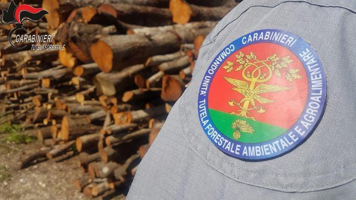 Paola (CS). Furto di legna nel bosco comunale, una denuncia
