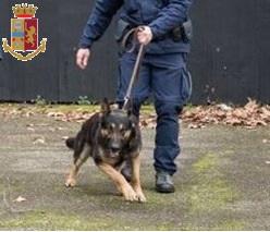 cane poliziotto in azione