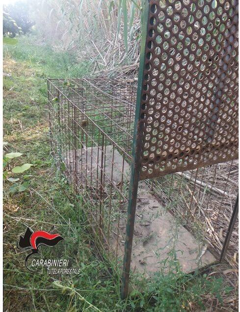 Lamezia. Sequestrate tre gabbie trappola per la cattura di animali selvatici