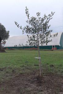 Foresta Che Avanza celebra annuale Festa dell'Albero nonostante il Covid