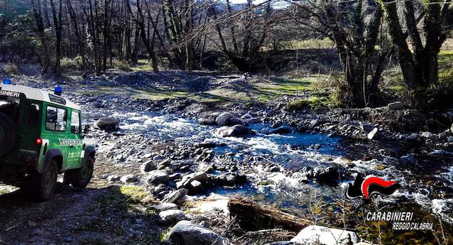 Sorpresi a tagliare alberi in Parco Aspromonte, due denunce