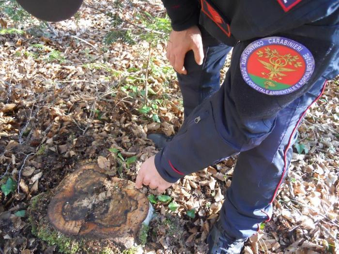 Contraffatto contratto vendita bosco, 2 denunce nel Vibonese