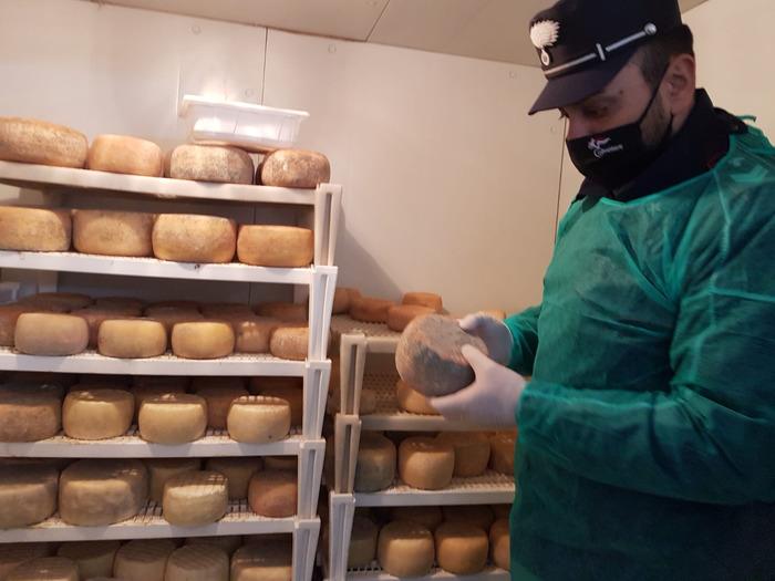 Sequestrati 350 chili prodotti caseari nel Cosentino