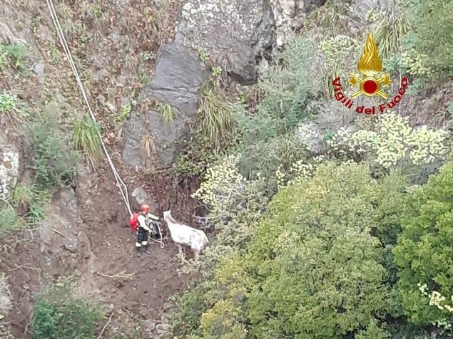 Stalettì (CZ). Cavallo attaccato da cinghiali cade in un dirupo, salvato dai vvff