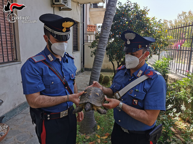 Tartaruga centenaria salvata dai carabinieri nel reggino