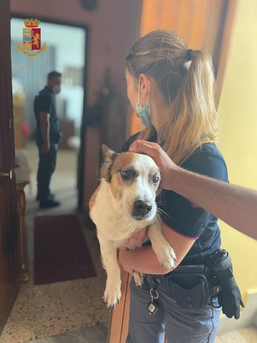 Fiamme in uno stabile, salvati inquilini e animali domestici