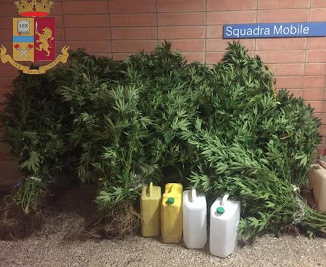 """Catanzaro: scoperta piantagione di marijuana. Denunciato il """"coltivatore"""""""