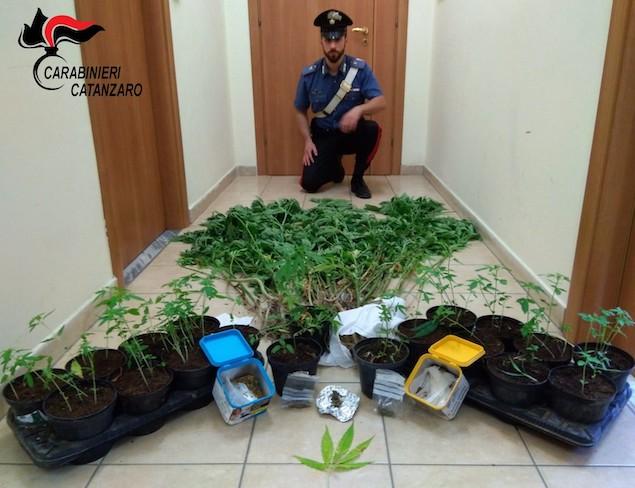 Coltiva nel terreno vicino casa 64 piante cannabis, arrestato