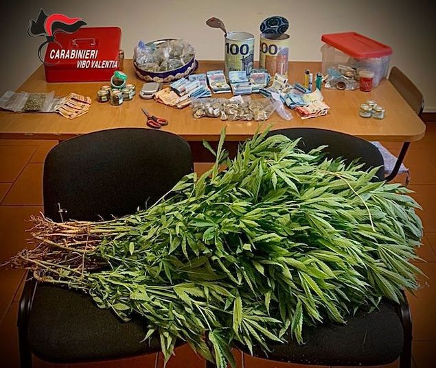 Droga: scoperte 75 piante e marijuana in dosi, un arresto
