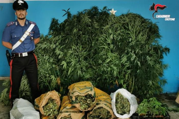 Droga: trovato con 18 chili di marijuana, arrestato