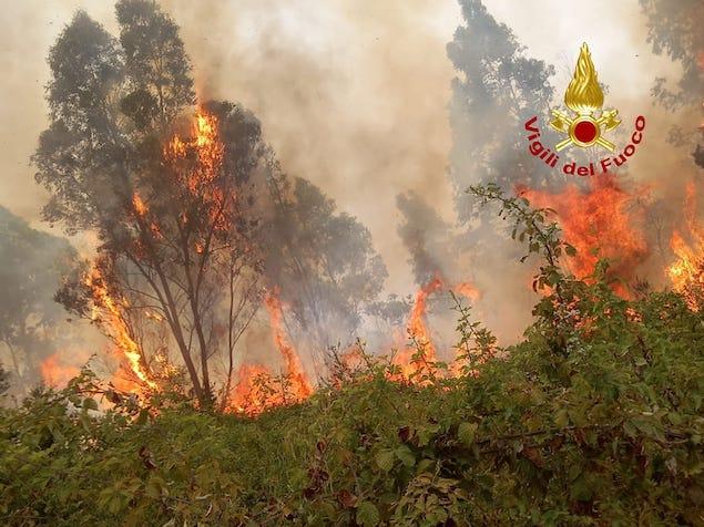 Gizzeria. Incendio arbusti e macchia mediterranea in loc. Mortilla e S. Caterina