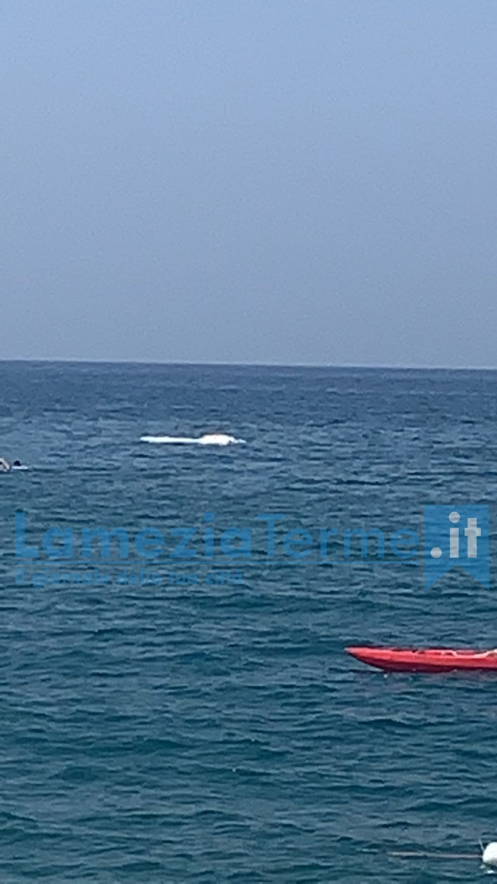Lamezia. Una balenottera morta nelle acque della Marinella