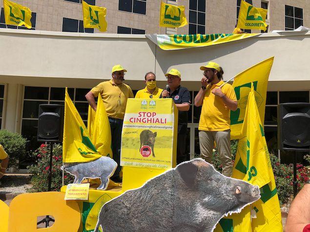 Manifestazione cinghiali: Spirli e Gallo hanno accolto proposte di Coldiretti