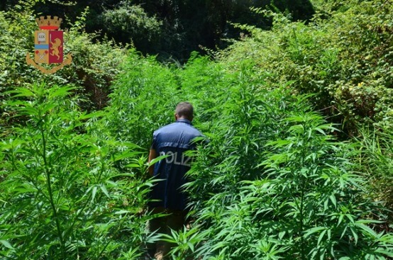 Catanzaro: piantagione di marijuana scoperta dalla Polizia di Stato