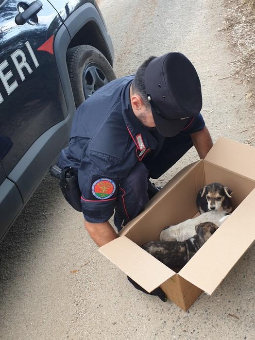 Cuccioli di cane abbandonati soccorsi dai carabinieri