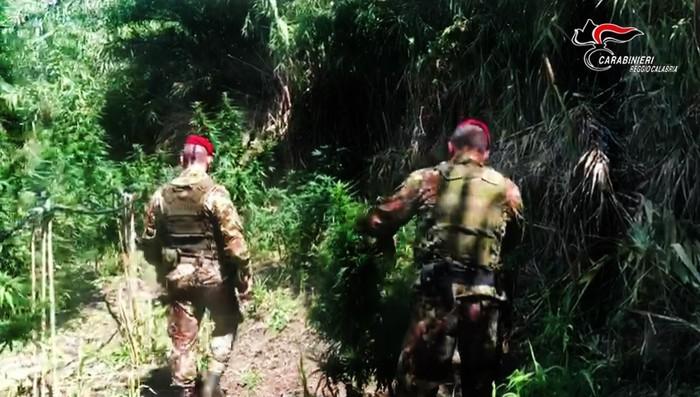 Droga: carabinieri sequestrano piantagioni di marijuana nel reggino