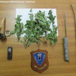 La polizia provinciale sorprende in flagranza di reato un uccellatore in Sila
